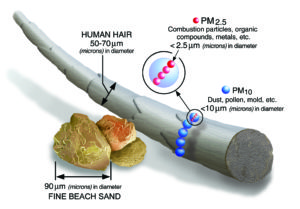 Size comparisons of different particulates