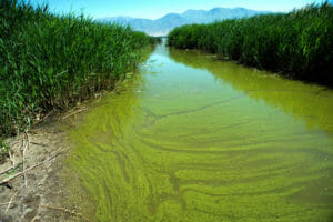 Algae Bloom -
